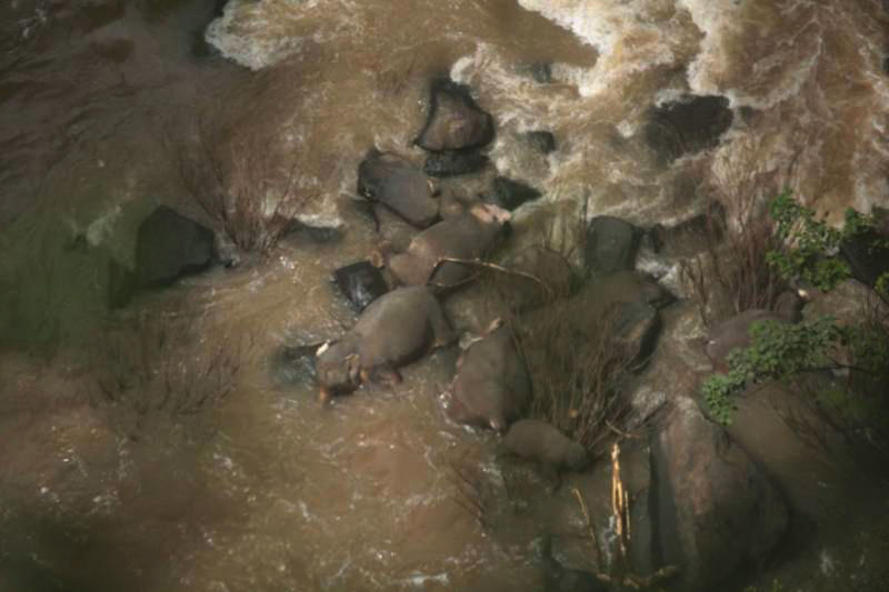An operation will be launched on Sunday to remove the carcasses of six elephants from Kaew Narok waterfall in Khao Yai National Park. (Photo supplied)