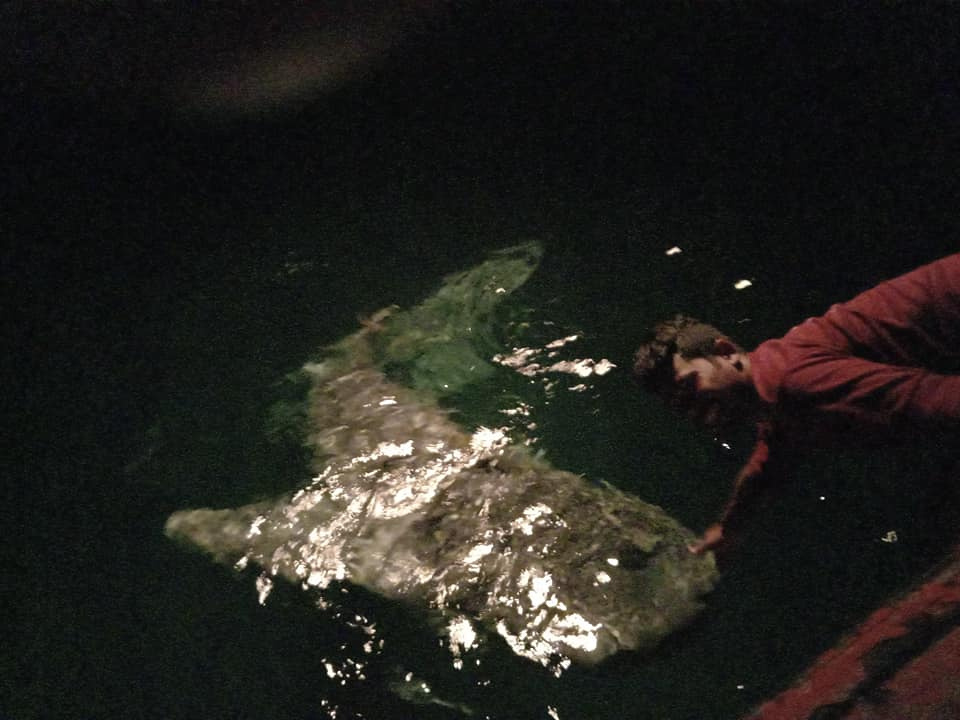 A Bryde's whale surfaced near a fishing boat off Bang Saphan dsitrict in Prachuap Khiri Khan province over the weekend. (Photo by Chaiwat Satyaem)