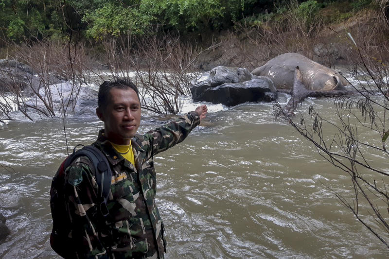 A park official on Wednesday points to a dead wild elephant floating downstream from Haew Narok waterfall in Nakhon Nayok. (Photo from Disaster Response Associations Thailand)