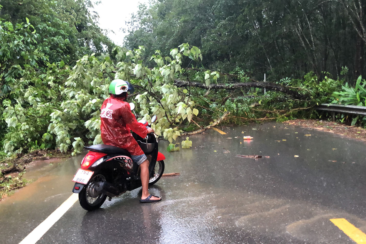 A fallen tree across the road halts a motorcyclist in Na Mom district after strong winds and rain pounded Songkhla on Thursday. (Photo by Assawin Pakkawan)