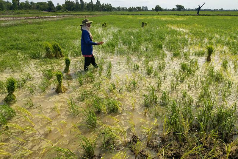 Worried about its exports, the US is applying pressure for a pause and reconsideration as    the Dec 1 deadline nears on the ban on three toxic farm chemicals. (Photo by Prasit Tangprasert)