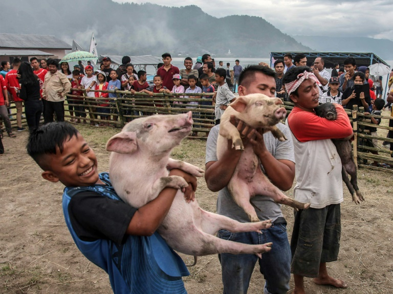 Contestants in a pig-catching competition show off their prize in Muara, Indonesia. (AFP photo)