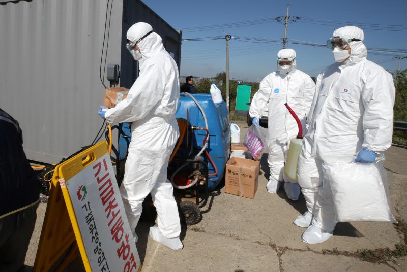 swine fever outbreak kills more than pigs