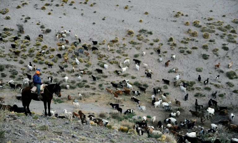 Sazo and other goat breeders scattered along the Andes foothills are on the frontline of climate change