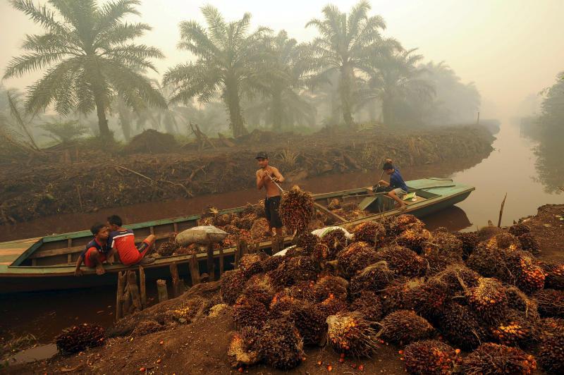 A worker unloads palm fruit in a palm oil plantation in Peat Jaya, Jambi province, on the Indonesian island of Sumatra, September 15, 2015. (Wahyu Putro A / Antara Foto / Photo file via REUTERS)