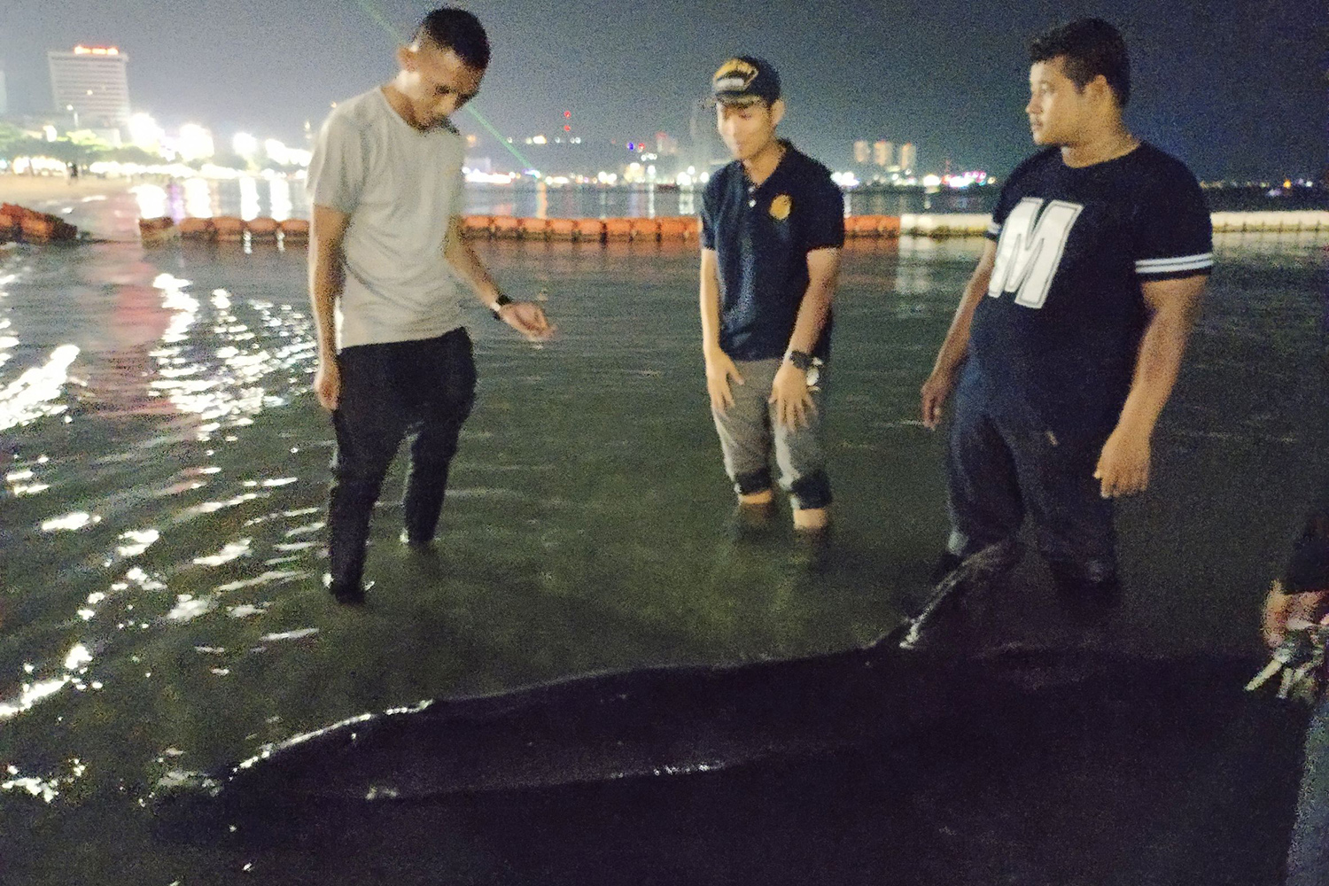 Officials look at a black killer whale washed ashore on a Pattaya beach on Wednesday night before taking it to a naval centre for marine animals. (Photo supplied by Chaiyot Pupattanapong)
