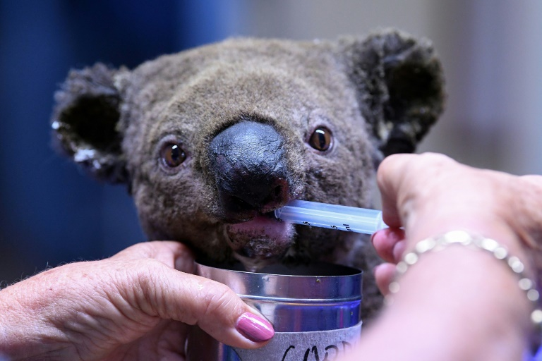 The Port Macquarie Koala Hospital near Sydney has raised more than Aus$1 million on GoFundMe to help bushfire-hit koalas.
