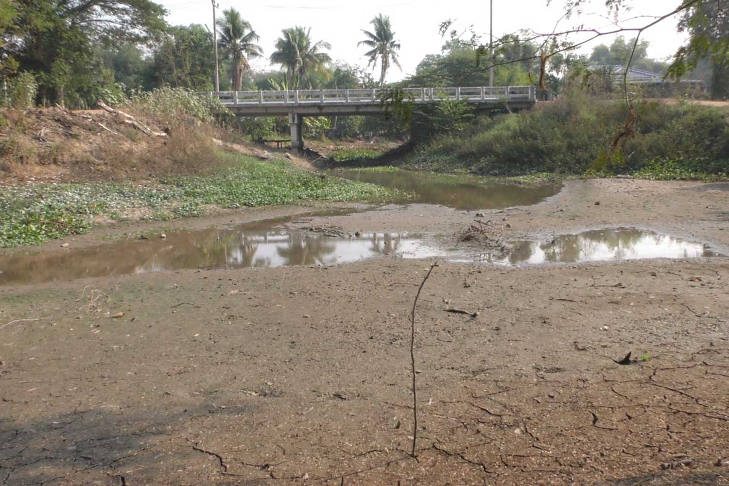 Klong Ban Nong canal has dried out at Moo 12 village of tambon Suea Hok in Muang district of Chai Nat province. The Royal Irrigation Department has been ordered to divert water from the west to hold back seawater creeping up into the Chao Phraya basin. (Photo by Chudet Seehawong)