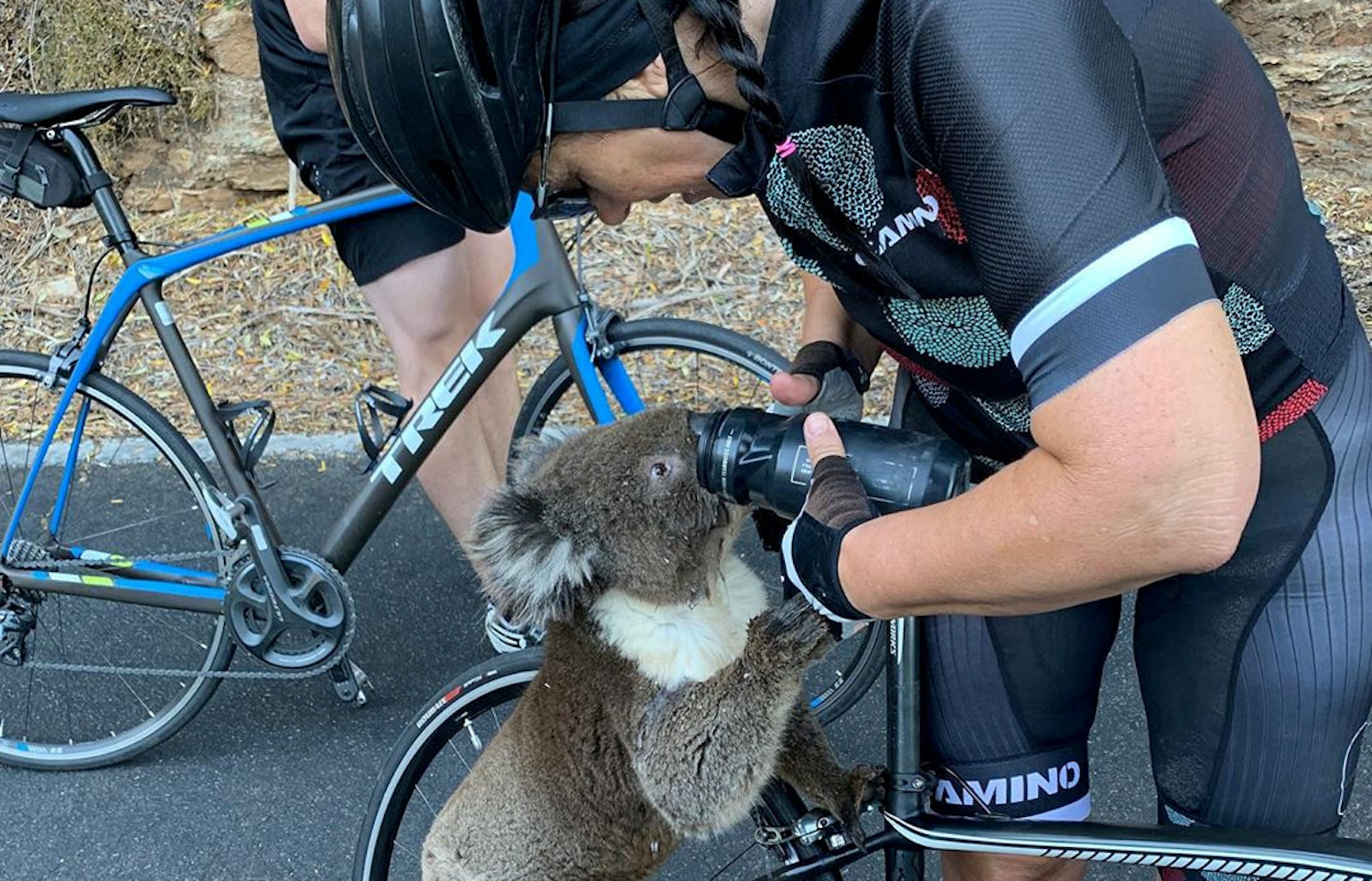 Koala chugs cyclist's water amid heatwave in Australia