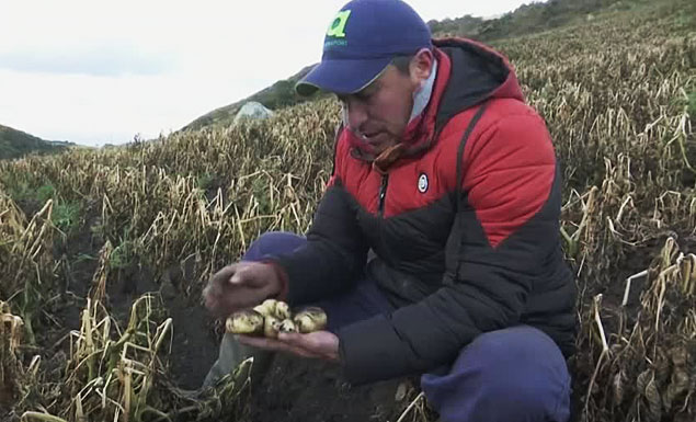 Frost linked to climate change pressures Colombian farmers