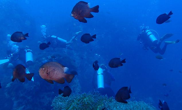Under the Thai sea