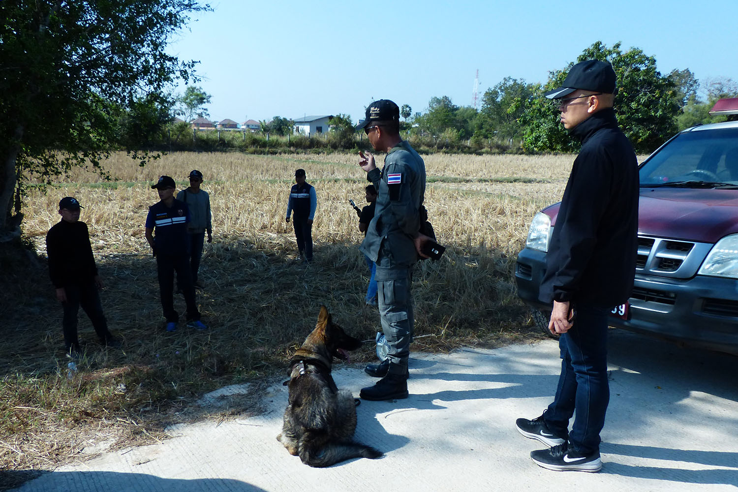 Police in Mukdahan use sniffer dogs to go after an Uighur migrant escaping from an immigration detention facility last week. (Photo by Chuchart Treeprapakorn)