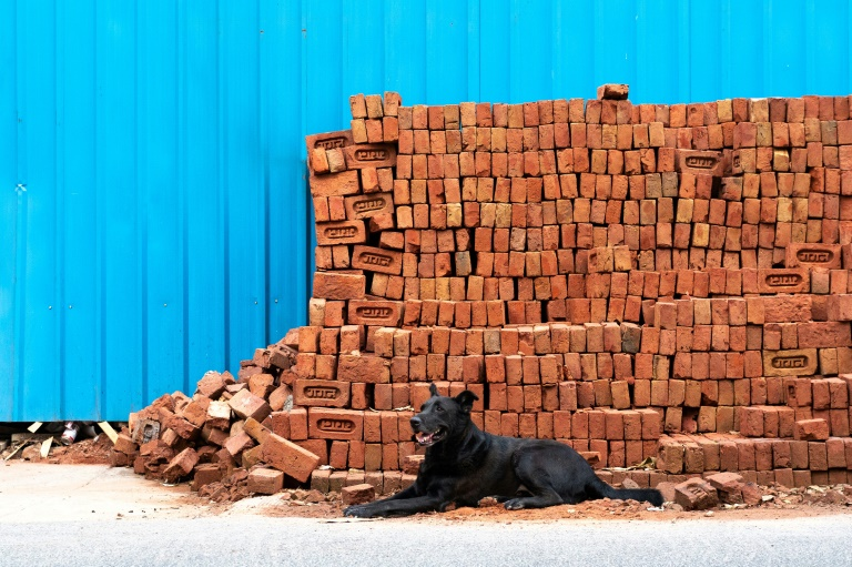 India has more than 30 million stray dogs such as this one in New Delhi