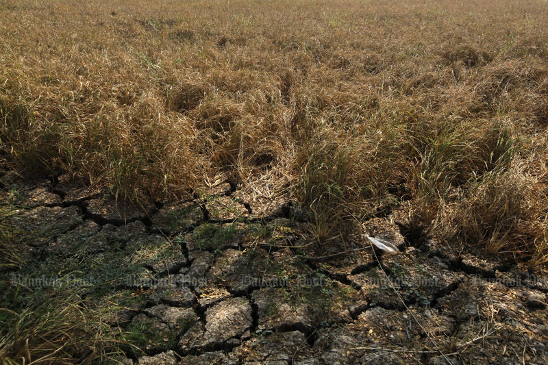 Farmland in Nakhon Luang district of Ayutthaya is dry and cracked due to drought. But the government assures us there will be enough tap water during the dry season. (Photo Wichan Charoenkiatpakul)