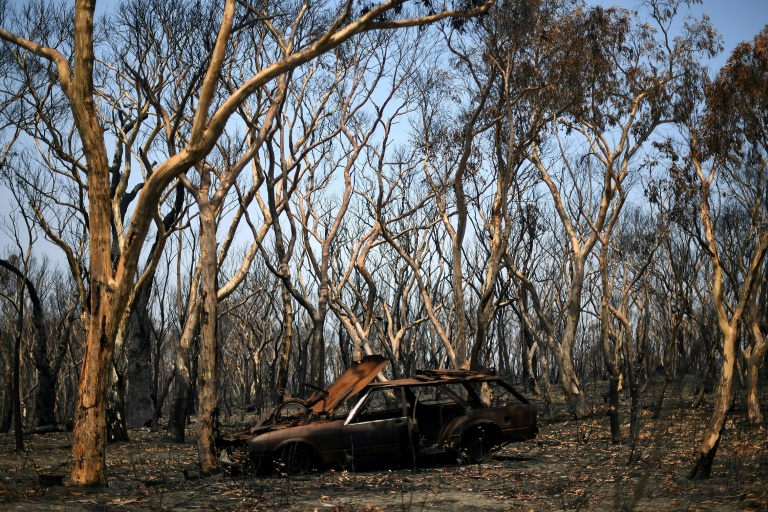 Months of bushfires in Australia have claimed 28 lives, burned thousands of homes and   killed an estimated one billion wild animals.