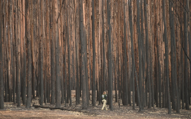 The bush fires in Australia have claimed 28 lives, scorched massive tracts of formerly pristine forests and destroyed thousands of homes.