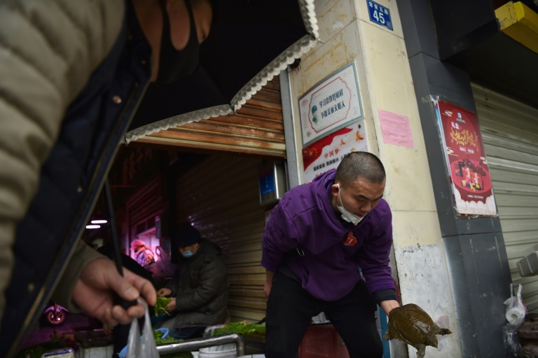 A turtle for sale at a market in Wuhan, the epicentre of a deadly new virus that came from an animal. (AFP photo)