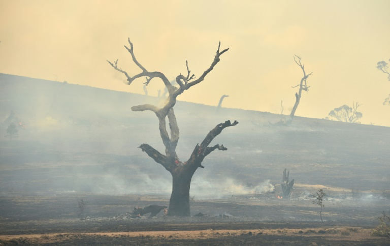 The devastating fires have raged since September, burning out more than 10 million hectares, killing 33 people and destroying more than 2,500 homes.