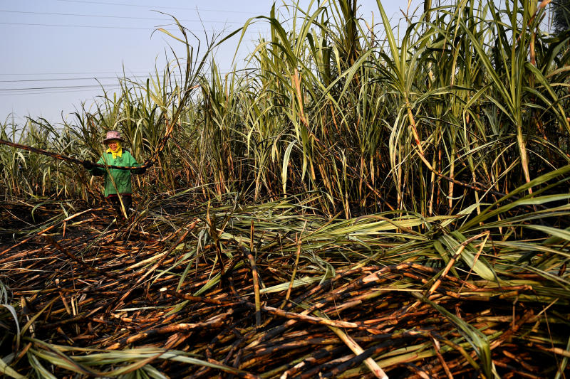 A sugar cane farmer works on a burnt field, a practice which authorities banned to avoid smog, in Suphan Buri province, north of Bangkok, Jan 21, 2020. (Reuters file photo)