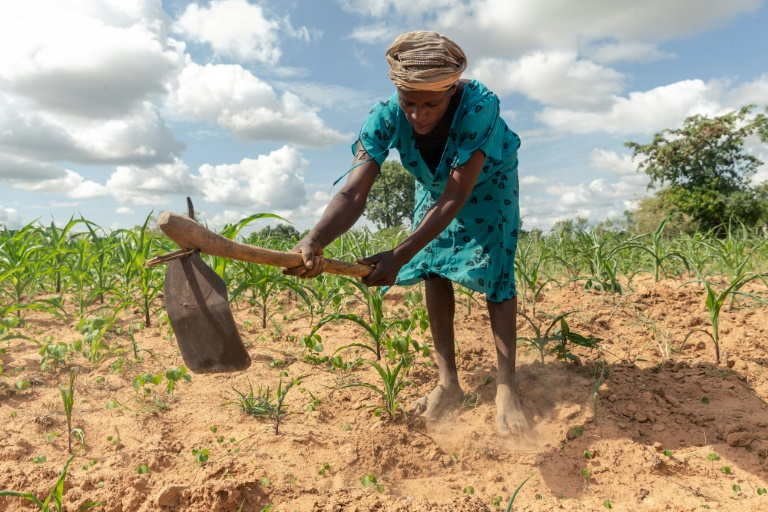 Climate extremes: A year ago, Josephine Ganye was hit by a devastating flood -- now she is struggling with a crippling drought.