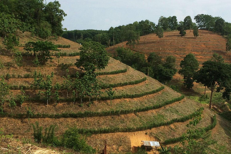 Below Terrace farms take shape on a hillside. (Photos by Land Development Department Region 7)