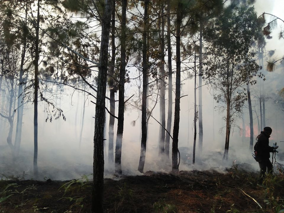 A firefighter walks in a damaged forest on Phu Kradueng National Park on Monday. (Photo from Phu Kradueng Facebook account)