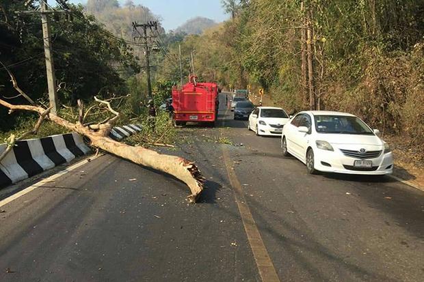 A roadside tree falls onto moving vehicles in Sangkhla Buri district of Kanchanaburi on Saturday. (Photo by Piyarat Chongcharoen)