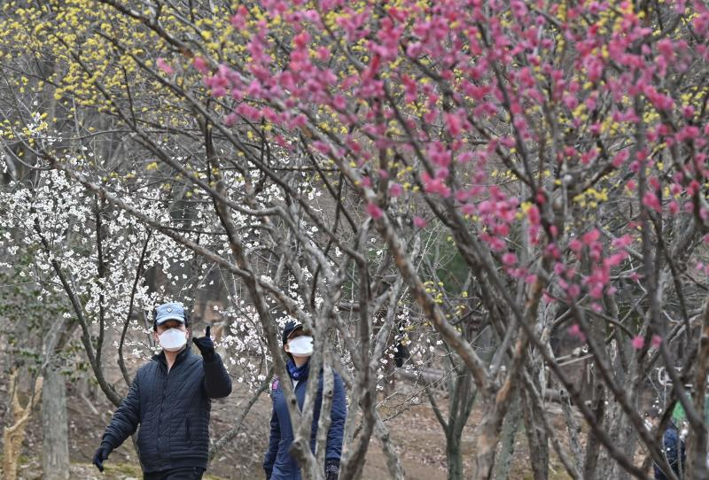 People wearing face masks walk at a park in Daegu, South Korea on Friday. (AFP photo)