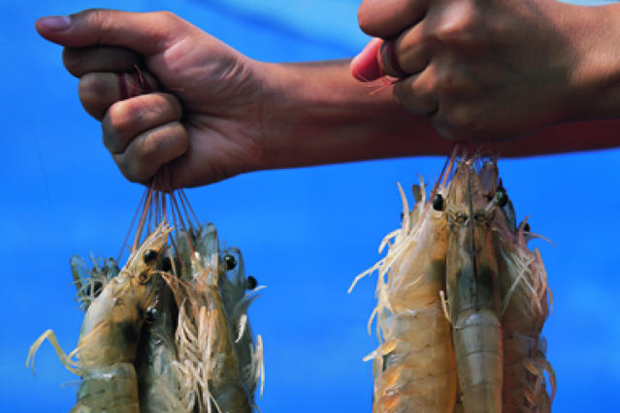 The Chearavanont family is considering setting up a shrimp farm in the United States.