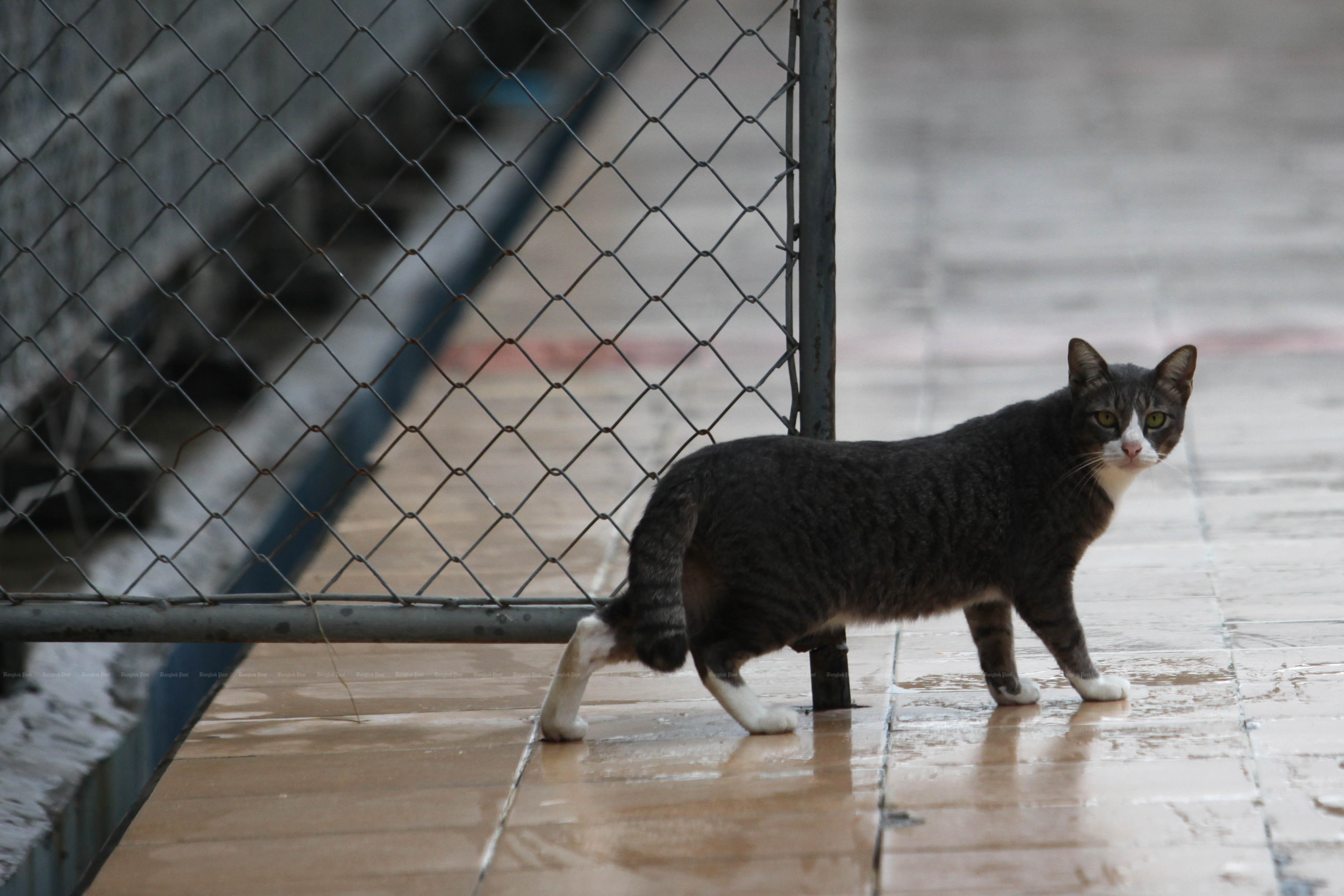 Shenzhen city in China plans to ban the eating of cats and dogs as part of the moves to contain the coronavirus outbreak. (Bangkok Post photo)