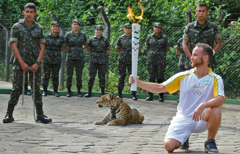 The jaguar later escaped.