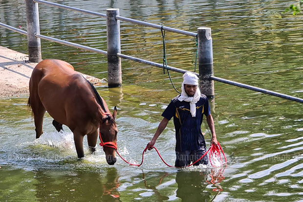 A racehorse is taken for a wash at a farm in Nakhon Ratchasima. (Photo: Prasit Tangprasert)