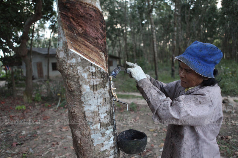 Rubber tappers are among those who will be allowed to work during the enforcement of the curfew from 10pm to 4am for the remainder of this month. (Post Today photo)