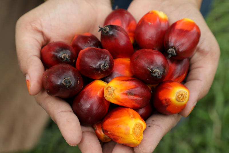 A Sime Darby Plantation worker shows palm oil fruits at a plantation in Pulau Carey, Malaysia, Jan 31, 2020. (Reuters file photo)