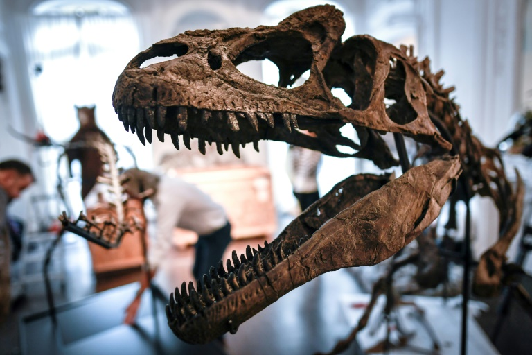 66 million years ago an asteroid roughly twice the diameter of Paris crashed into Earth, wiping out all land-dwelling dinosaurs and 75 percent of life on the planet