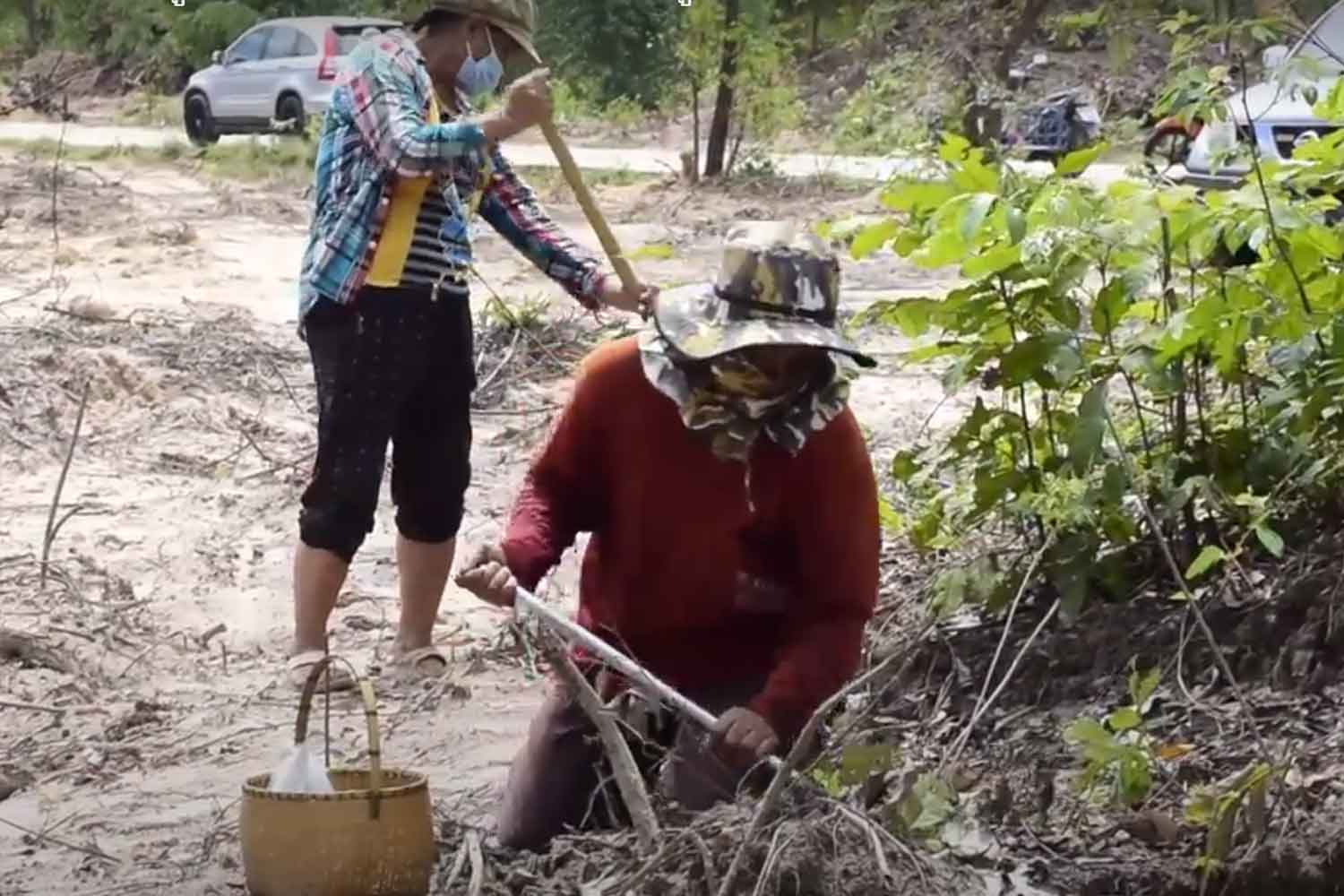 Part of the 300 rai in a forest reserve where glyphosate had been used to kill weeds and tree stumps in Khuang Nai district, Ubon Ratchathani. Villagers on Wednesday staged a protest against the use of the controversial herbicide. (Photo: Nila Singkiree)