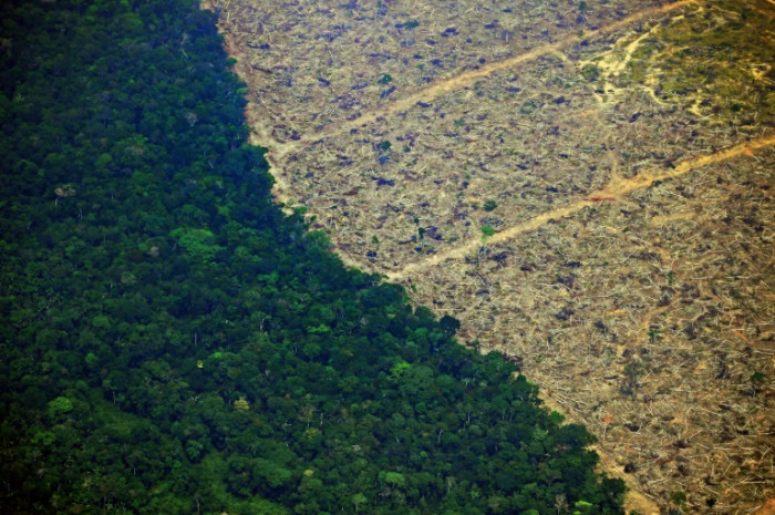 Football pitch of rainforest 'destroyed every 6 seconds'