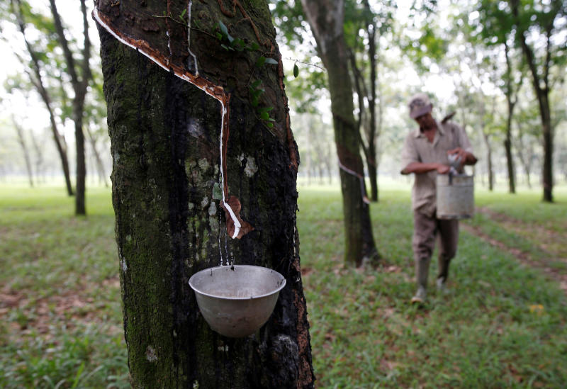A worker collects latex at a rubber plantation near Bogor, southwest of Jakarta in West Java province, Indonesia, on May 28, 2016. (Reuters photo)