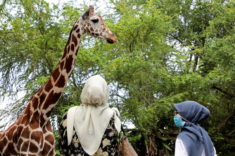 Visitors look at a giraffe at National Zoo which re-opened after lockdown, amid the coronavirus disease (Covid-19) outbreak in Kuala Lumpur, Malaysia on Wednesday. (Reuters photo)