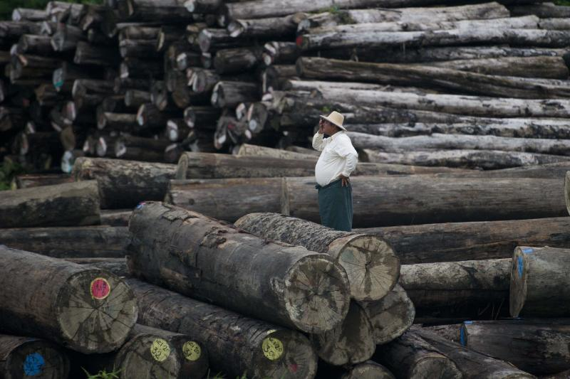 This file photo taken on July 23, 2015 shows a worker looking on amid a pile of logs at a holding area along the Yangon river in Yangon. (AFP)