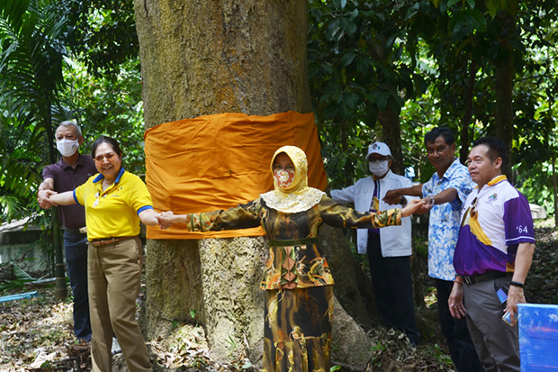 Officials take a photo with a big tree at Ban Khao Kaew, which once was a base of the now-defunct Communist Party of Thailand, in Si Banphot district of Phatthalung on Sunday. (Photo by Assawin Pakkawa)