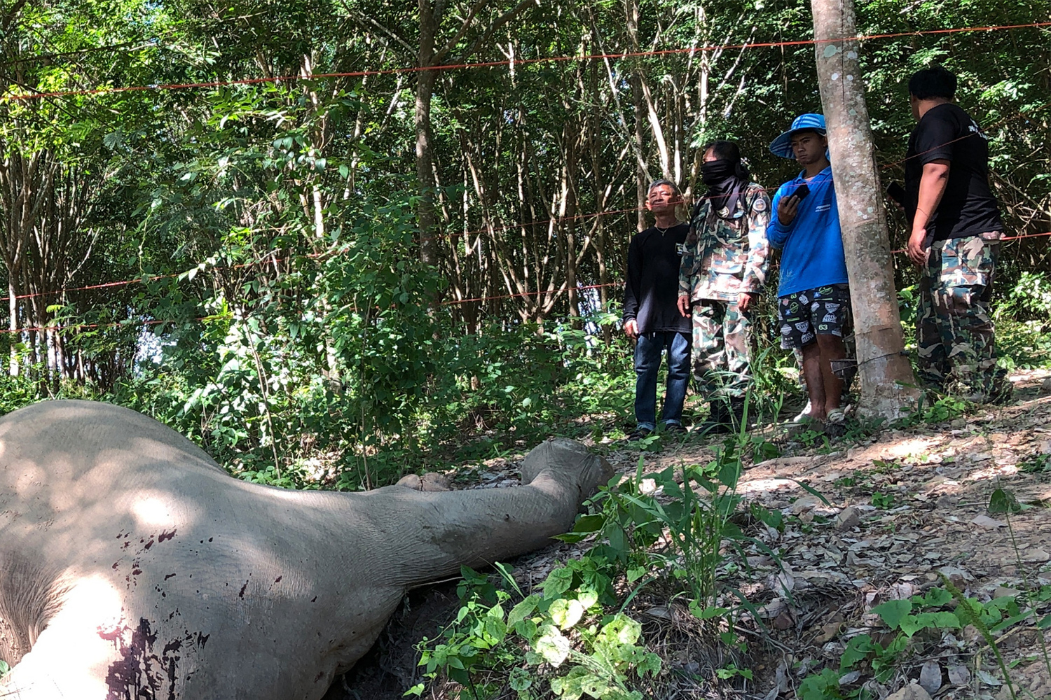 Rangers look at the body of a wild elephant found dead in Kui Buri National Park in Kui Buri district of Prachuap Khiri Khan on Saturday. (Photo by Chaiwat Satyaem)