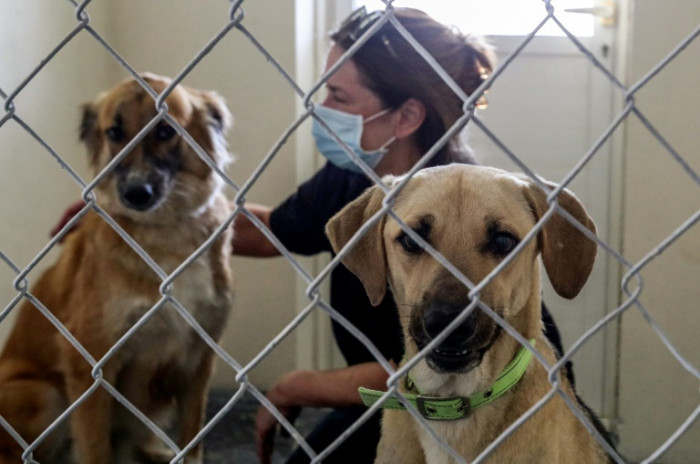 Ruff Deal Animal Shelter Braces For Surge As Expats Abandon Qatar
