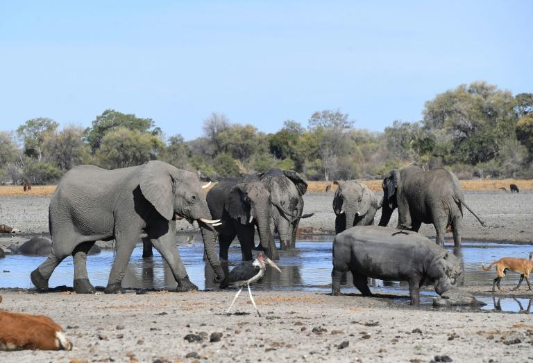 Botswana is home to some 130,000 elephants.