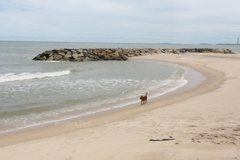 A dog enjoys a walk at Saeng Chan, one of the popular beaches in Muang district of Rayong, on Tuesday. (Photo: Wichan Charoenkiatpakul)
