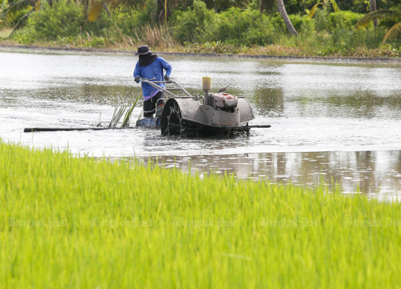 A farmer works in a rice field in Lat Lum Kaeo district of Pathum Thani. (Photo by Pattarapong Chatpattarasill)