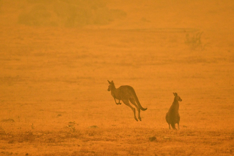A kangaroo bounds through a field shrouded in smoke amid the eerie glow from bushfires in Snowy Valley on the outskirts of Cooma, New South Wales, in January.