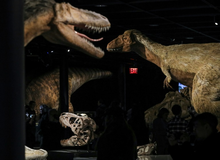 A new study identifies the first known case of cancer in dinosaurs and shows they suffered from the debilitating disease too