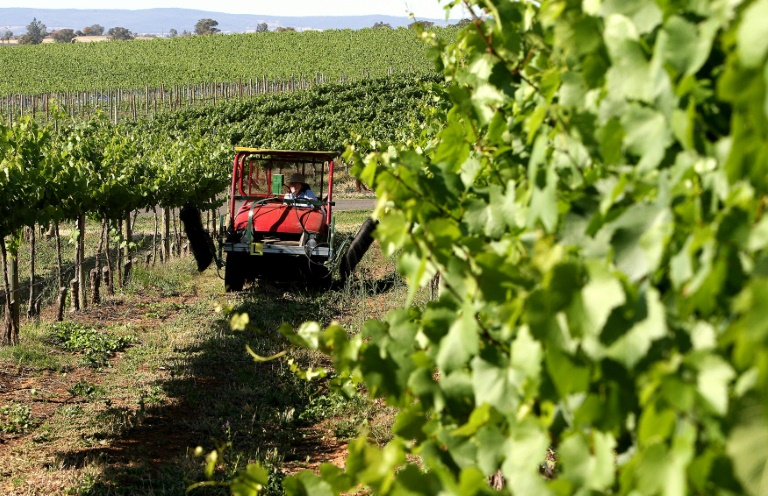China starts anti-dumping probe into Aussie wine