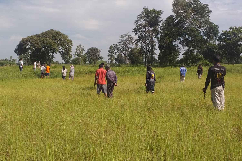 Police and villagers search the rice field in Prakhon Chai district, Buri Ram, where human bones were found on Tuesday. (Photo: Surachai Piragsa)